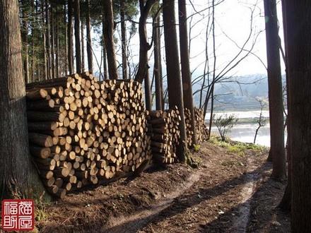 木を隠すなら森の中.jpg