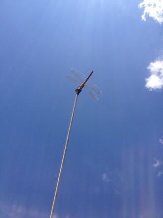 空に臨む【dragonfly】 .JPG