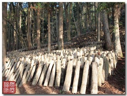 木を隠すには森の中.jpg