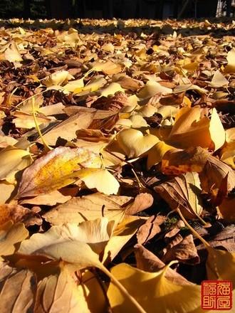 秋に買った絨毯で【Autumn collection】 .jpg