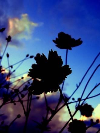 路傍の秋【Autumn Season】 .jpg