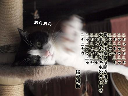 _6207708.jpg